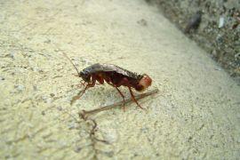 Crni žohar